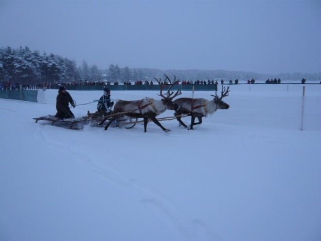 reindeer-racing-1