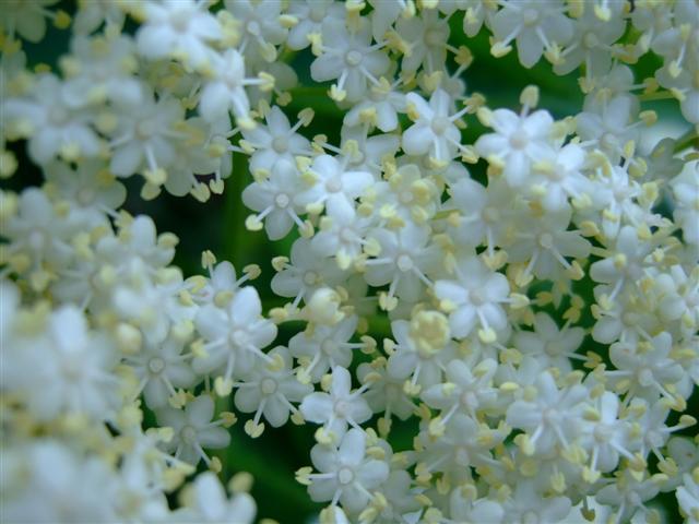 wild-plants7-small