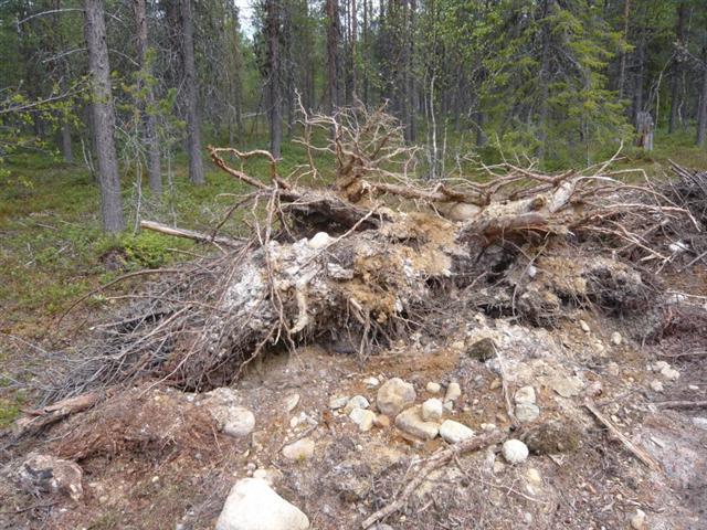 Caper nest (Small)