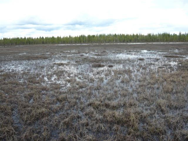 marsh (Small)