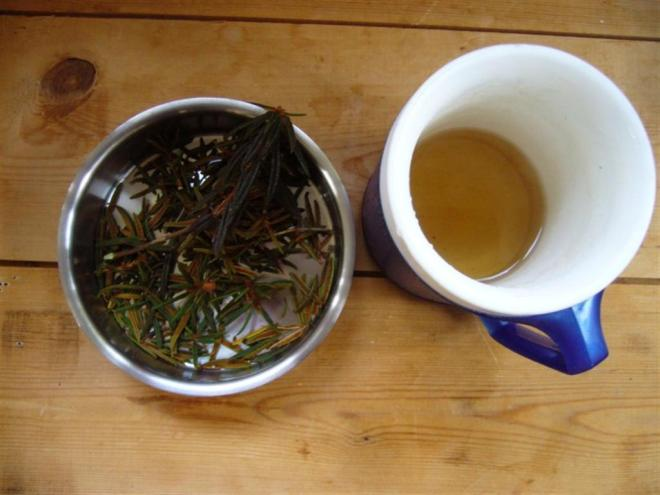 Labrador tea (Large)