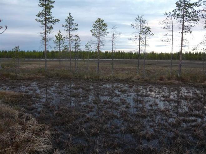 marsh again (Medium)