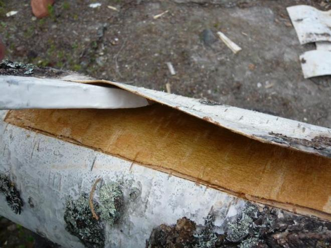 removing bark (Medium)