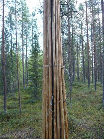 Tipi poles (Small)