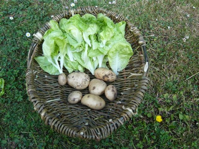 veg garden-6 (816 x 612) (Small)