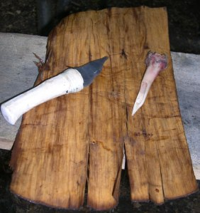 Bark ready for cutting.