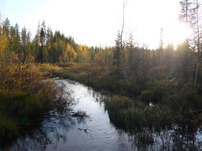 evening view (Medium)