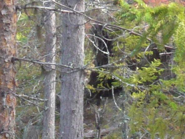 Bear den closeup (592 x 445)