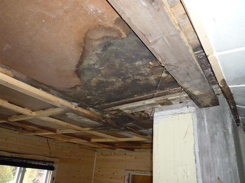 Repairing Kitchen Ceiling Laplander S Natural Lore Blog