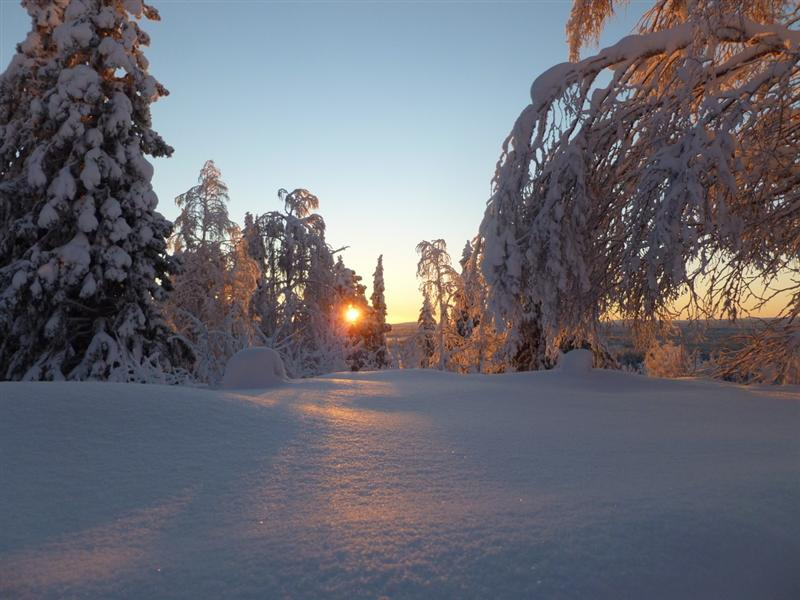 Mid-winter sun Nattavaara