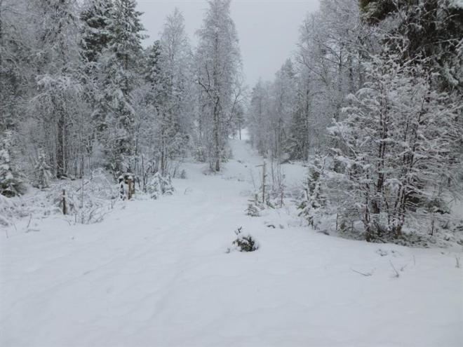 snowfall in may (Medium)