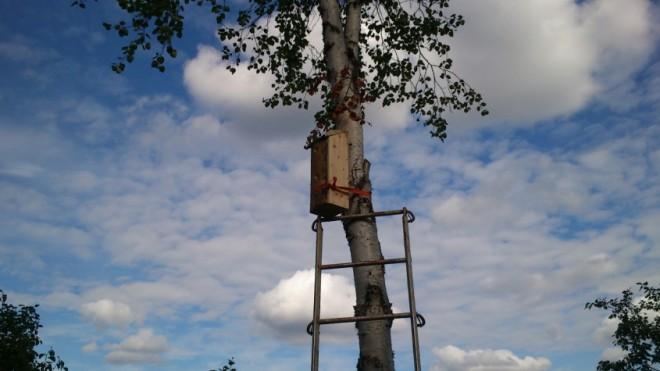 lapland swift nestbox
