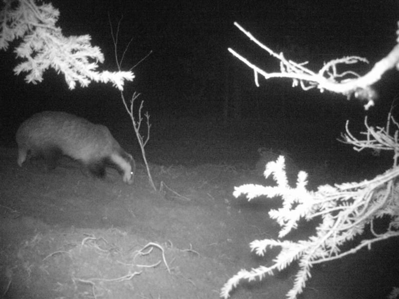Real Snow Began After Dark >> Lapland Laplander S Natural Lore Blog
