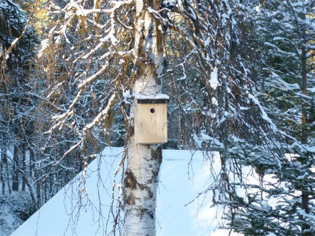 nestbox (Small)