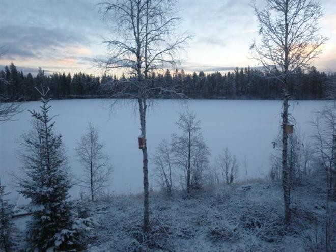 view from window-1 (Medium)