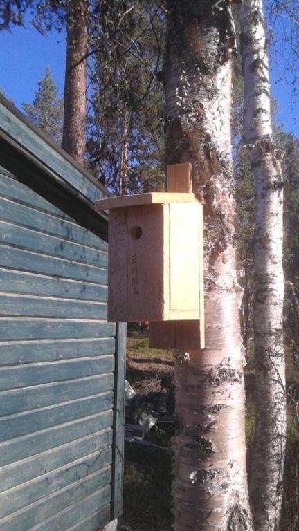 emma nestbox-2 (Large)