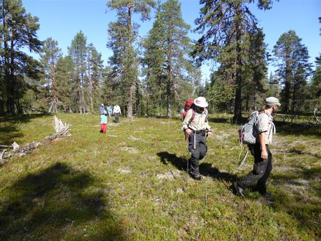 guided walk lapland (Small)