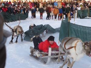 jokkmokk reindeer race