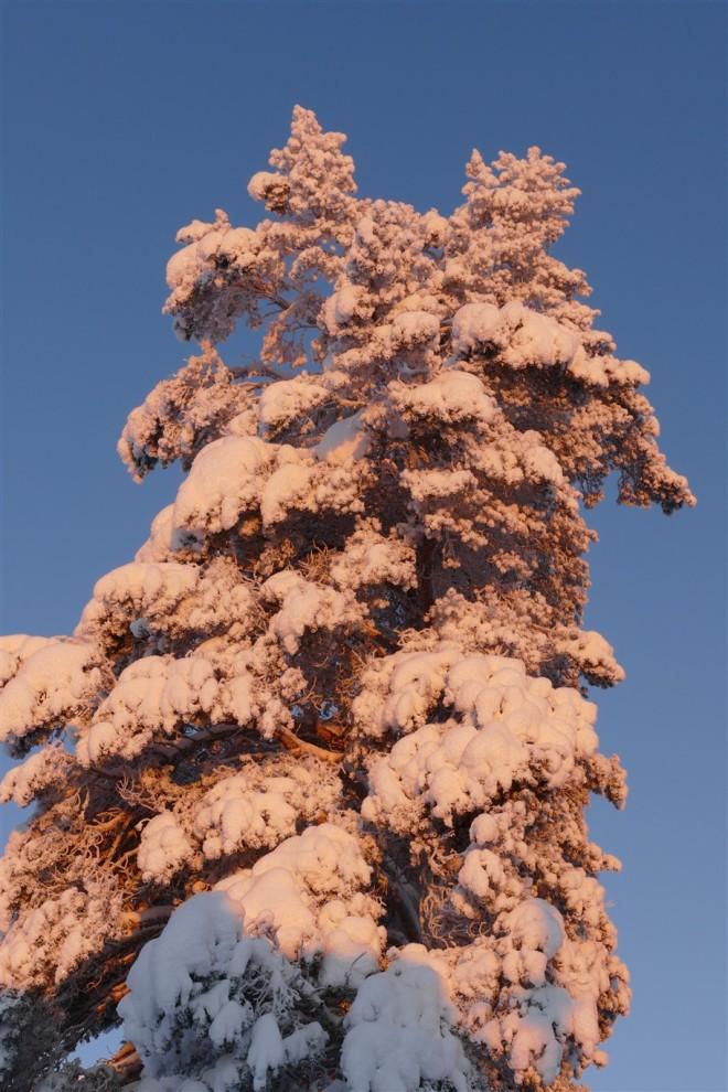 sun on treetops