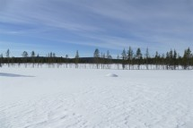 deforestation-lapland-2