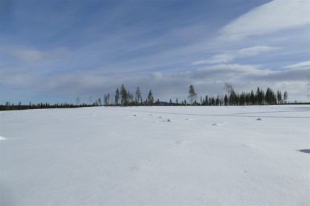 deforestation-lapland-3