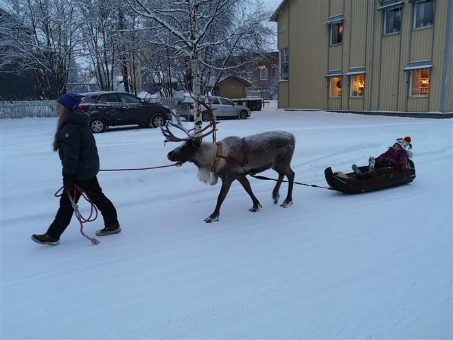 reindeer-ride-jokkmokk