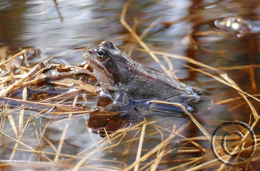 frog (886 x 585)